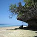 SIT Study Abroad: Tanzania Zanzibar: Coastal Ecology and Natural Resource Management