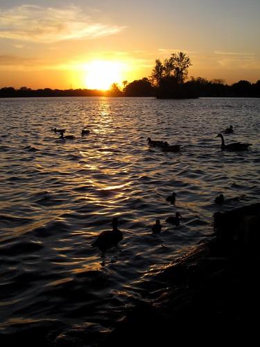 sunset wisconsin river spring ducks stevenspoint