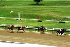 pasture(0.0), harness racing(0.0), animal sports(1.0), horse racing(1.0), racing(1.0), equestrian sport(1.0), sports(1.0), race(1.0), race track(1.0), jockey(1.0),