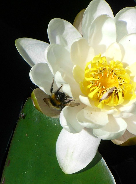 Bee(n) for a drink - now for the pollen