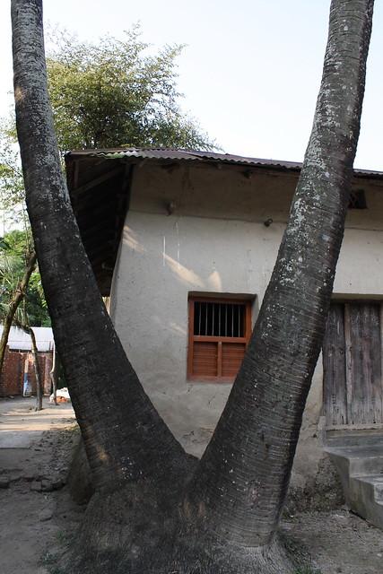 Bangladesh village traditional house flickr photo sharing for Bangla house photo