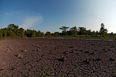 horizon, field, soil, drought, tree, landscape, rural area, sky,