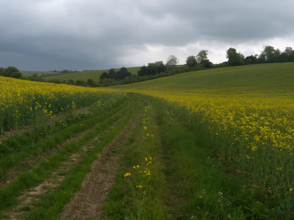 Through a rapefield Goring Circular (via Moulsford