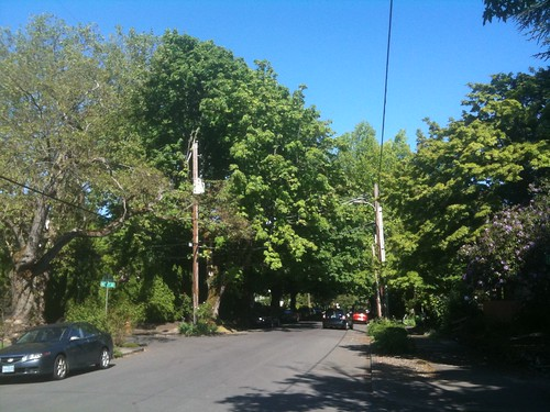 Planting Trees Around Power Lines : Trees and power lines should we plant tall under primary