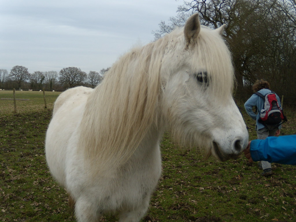 White Horse Petersfield to Liss