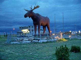 sk08i07 Giant Moose at Moose Jaw SK 2008