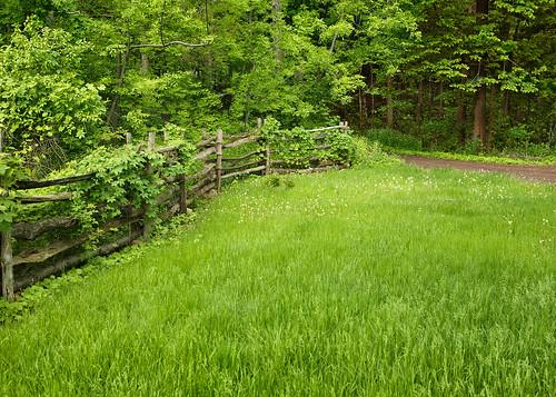 new york ny green church forest fence woodland landscape woods grove scenic rail growth sacred mormon split lush lds shady palmyra sacredgrove firstvision thesacredgrove thefirstvision