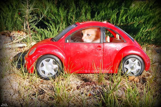 Car driving Cat