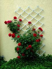 art(0.0), christmas decoration(0.0), aquifoliaceae(0.0), christmas tree(0.0), christmas(0.0), aquifoliales(0.0), flower arranging(1.0), flower(1.0), floral design(1.0), red(1.0), plant(1.0), floristry(1.0),