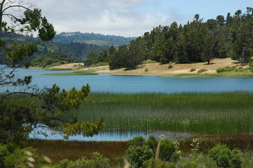 Rushes in the lovely Upper Crystal Springs Lake, Half Moon Bay Road, reserve and reservoir, trees and hills, San Mateo County, California, USA by Wonderlane