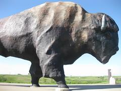 rhinoceros(0.0), cattle-like mammal(1.0), bull(1.0), mammal(1.0), fauna(1.0), bison(1.0), wildlife(1.0),