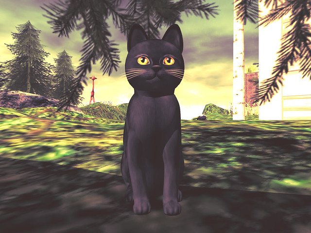 A regular cat lady (Veronica, KittyCatS Russian - Black 3T in Second Life)