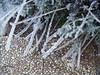 8 de enero, flora de Cheste
