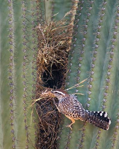 Piante grasse cactus e succulente novembre 2009 - Cactus da interno ...