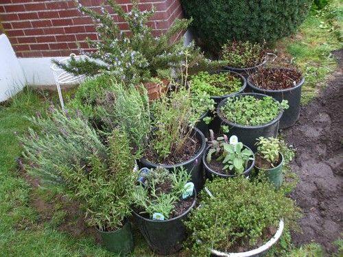 Container herb garden flickr photo sharing for Container herb garden