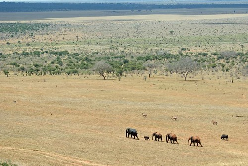 elephant game nikon kenya reserve safari soe tsavo d80 abigfave platinumphoto theunforgettablepictures goldstaraward grouptripod