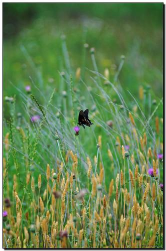flower texas tx wildflower oscote