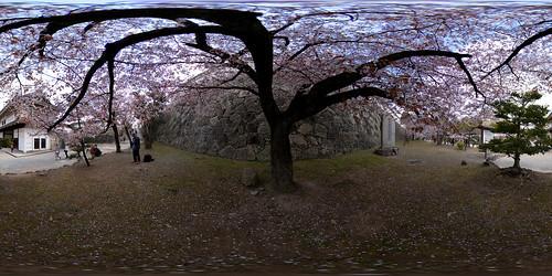 panorama castle japan spring handheld cherryblossom himeji sakura 360x180 himejicastle himejijou equirectangular panotool