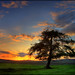 Drimmie Tree @ Sunset by angus clyne