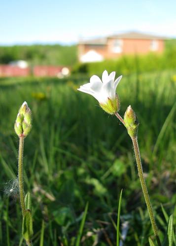 fleurs blanches blogfkchs