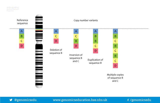 Copy number variants