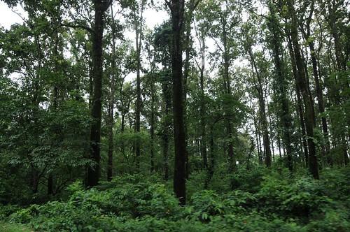 forest general westbengal geo:dir=341 june2008 geo:lat=268606083333333 geo:lon=8846492 mangpongforest