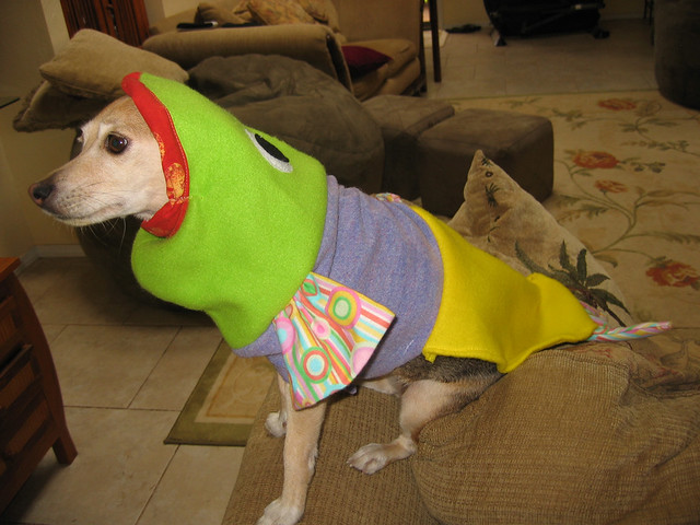 lucy dog fish costume flickr photo sharing