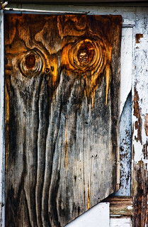 Old Shed Door