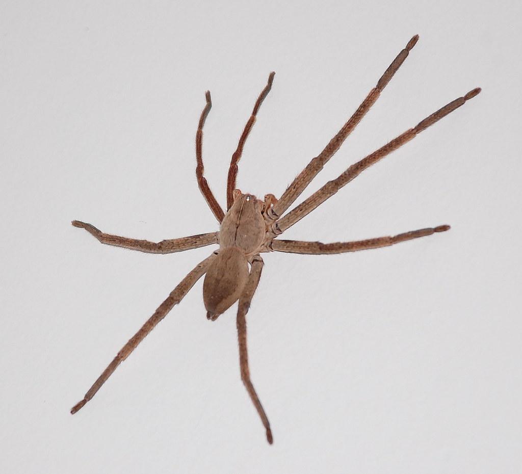 Evening spider