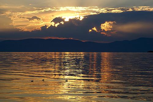 sunset mexico ducks explore goldenhour ajijic chapala lagodechapala utehagen uteart biggestlakeinmexico explore011909