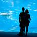 Atlanta Aquarium Silhouette