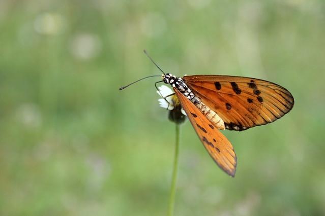 Bokeh Butterfly