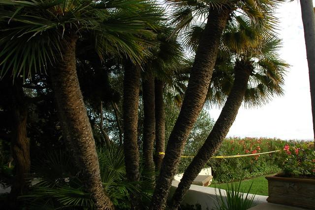 Meditation Garden Self Realization Fellowship Encinitas California Usa 3491 Flickr
