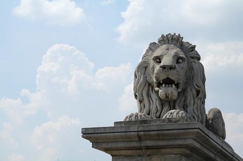 Un leone sul Ponte delle catene