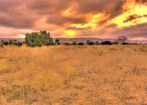 trees sunset tree nature desert mojave juniper mojavedesert mohave desertsunset junipertree mohavedesert supershot quantummottle2 joelach