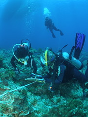 TEIA結合民間潛水志工,進行珊瑚礁體檢,共同守護美麗的海洋。