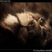 Sad lion, MGM Grand (2)