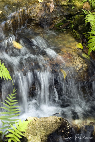 fern waterfall