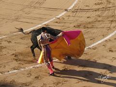 performing arts(0.0), camel(0.0), animal sports(1.0), cattle-like mammal(1.0), bull(1.0), tradition(1.0), sports(1.0), bullring(1.0), mammal(1.0), matador(1.0), performance(1.0), bullfighting(1.0),