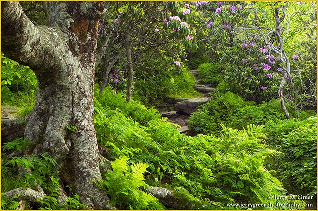 Summer Trail Craggy Gardens Blue Ridge Parkway Nc Flickr Photo Sharing