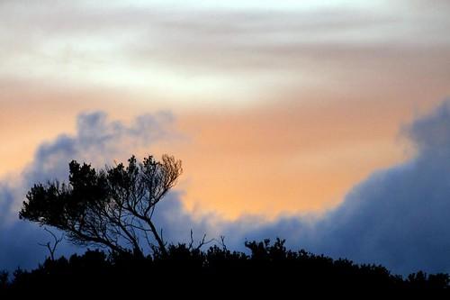 sunrise tidalriver teatree myrtaceae wilsonspromontory leptospermum