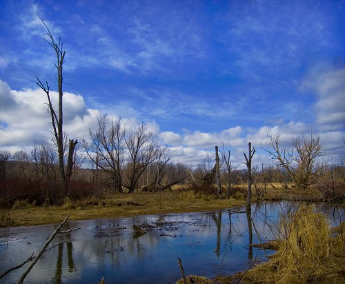 trees winter ohio nature beauty landscape bluesky na wetlands hinckley richfield clevelandmetroparks risingvalleypark