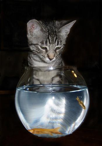 Cat Fish 2