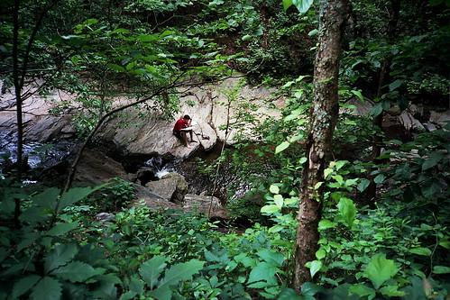 trees red green water leaves rock reading stream asheville peaceful superia400 2009 olympusxa ditlo uncabotanicalgardens ditloa2009all ditloa2009submit googleavl isupportgooglefiberasheville