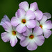 Phlox Family - Photo (c) James Gaither, some rights reserved (CC BY-NC-ND)