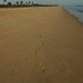 Why are the beaches in Goa so crowded ? :-)