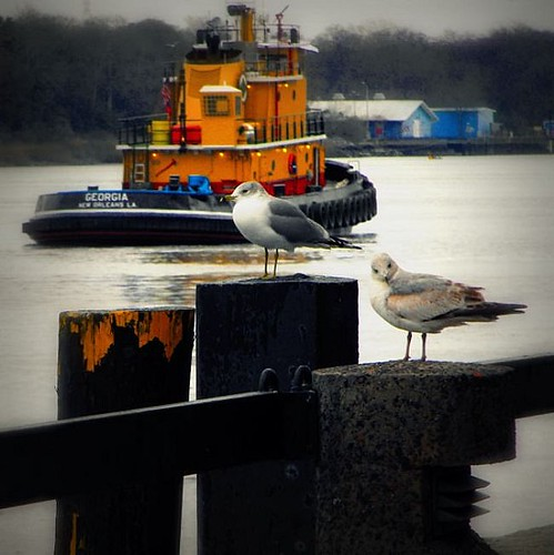 Tugboat with Seagulls