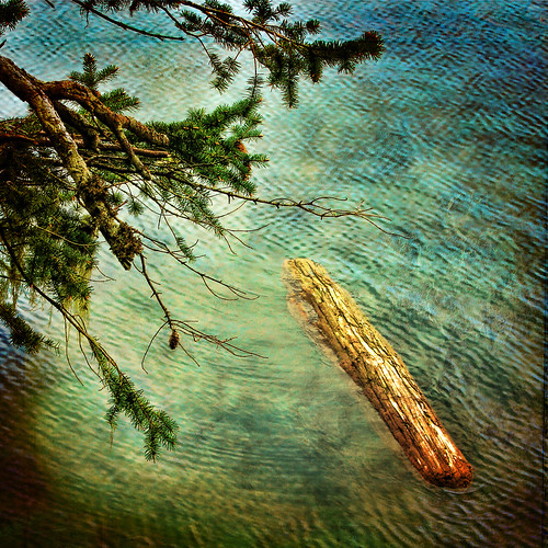 ocean sea seascape tree green water pool log pacific calm whirlpool ripples westcoast sooke becherbay zedzap magicunicornverybest