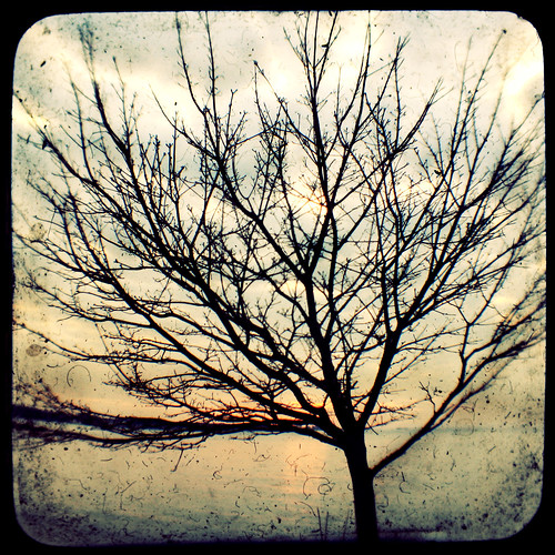 winter sunset tree connecticut thamesriver lis argus silohuette longislandsound groton averypoint ttv courtnayjaniak
