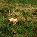 Small photo of decomposition